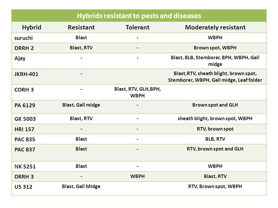 Hybrids resistant to pests and diseases HybridResistantTolerantModerately resistant suruchi Blast-WBPH DRRH 2 Blast, RTV-Brown spot, WBPH Ajay --Blast, BLB, Stemborer, BPH, WBPH, Gall midge JKRH-401 -Blast,RTV, sheath blight, brown spot, Stemborer, WBPH, Gall midge, Leaf folder CORH 3 -Blast, RTV, GLH,BPH, WBPH PA 6129 Blast, Gall midge-Brown spot and GLH GK 5003 Blast, RTV-sheath blight, brown spot, WBPH HRI 157 --RTV, brown spot PAC 835 Blast-BLB, RTV PAC 837 Blast-RTV, brown spot and GLH NK 5251 Blast-WBPH DRRH 3 -WBPHBlast, RTV US 312 Blast, Gall MidgeRTV, Brown spot, WBPH
