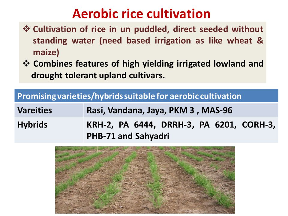  Cultivation of rice in un puddled, direct seeded without standing water (need based irrigation as like wheat & maize)  Combines features of high yielding irrigated lowland and drought tolerant upland cultivars.