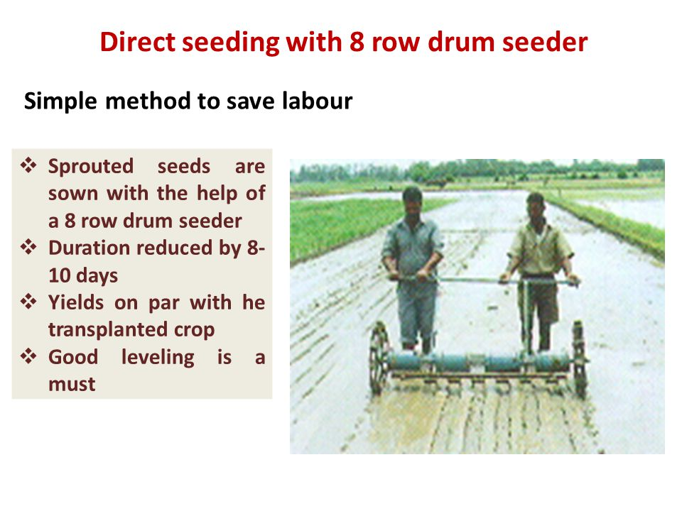 Direct seeding with 8 row drum seeder Simple method to save labour  Sprouted seeds are sown with the help of a 8 row drum seeder  Duration reduced by 8- 10 days  Yields on par with he transplanted crop  Good leveling is a must
