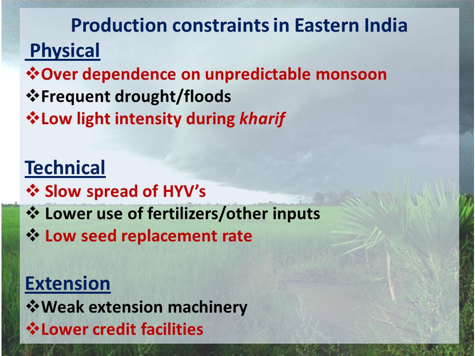 Production constraints in Eastern India Physical  Over dependence on unpredictable monsoon  Frequent drought/floods  Low light intensity during kharif Technical  Slow spread of HYV's  Lower use of fertilizers/other inputs  Low seed replacement rate Extension  Weak extension machinery  Lower credit facilities