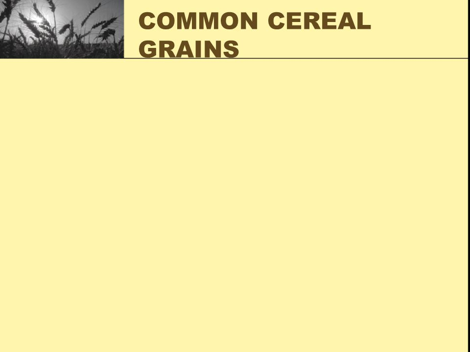COMMON CEREAL GRAINS