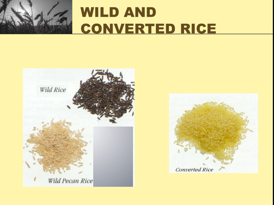 WILD AND CONVERTED RICE