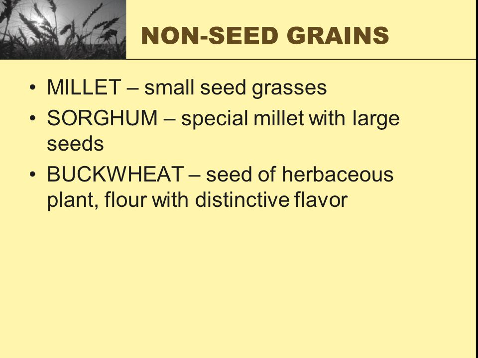 NON-SEED GRAINS MILLET – small seed grasses SORGHUM – special millet with large seeds BUCKWHEAT – seed of herbaceous plant, flour with distinctive fla