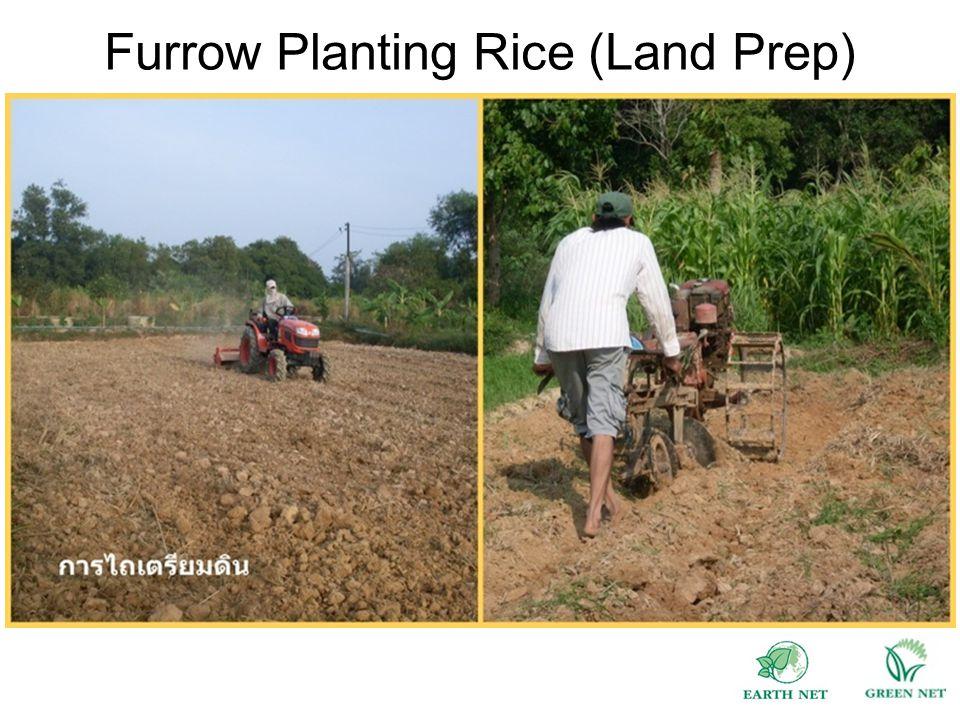 Furrow Planting Rice (Land Prep)