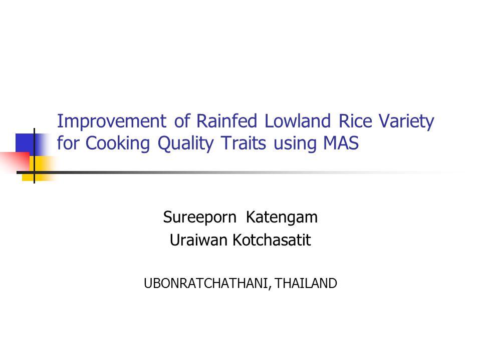 Improvement of Rainfed Lowland Rice Variety for Cooking Quality Traits using MAS Sureeporn Katengam Uraiwan Kotchasatit UBONRATCHATHANI, THAILAND