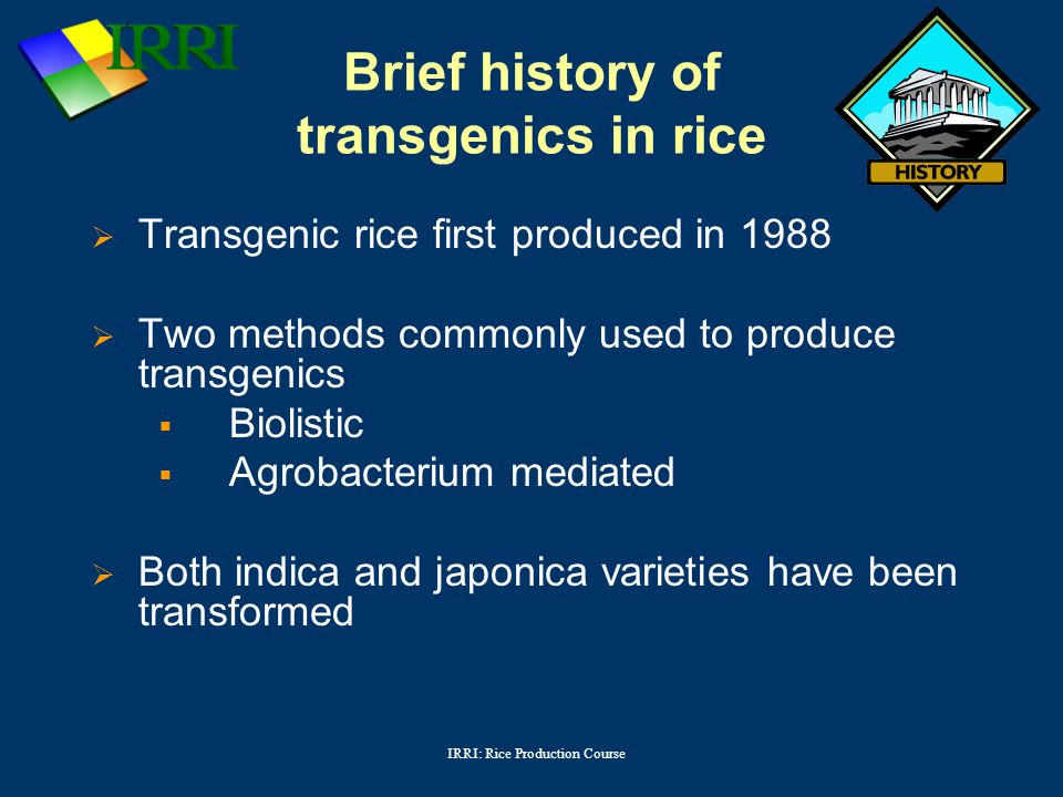 IRRI: Rice Production Course Brief history of transgenics in rice  Transgenic rice first produced in 1988  Two methods commonly used to produce transgenics  Biolistic  Agrobacterium mediated  Both indica and japonica varieties have been transformed