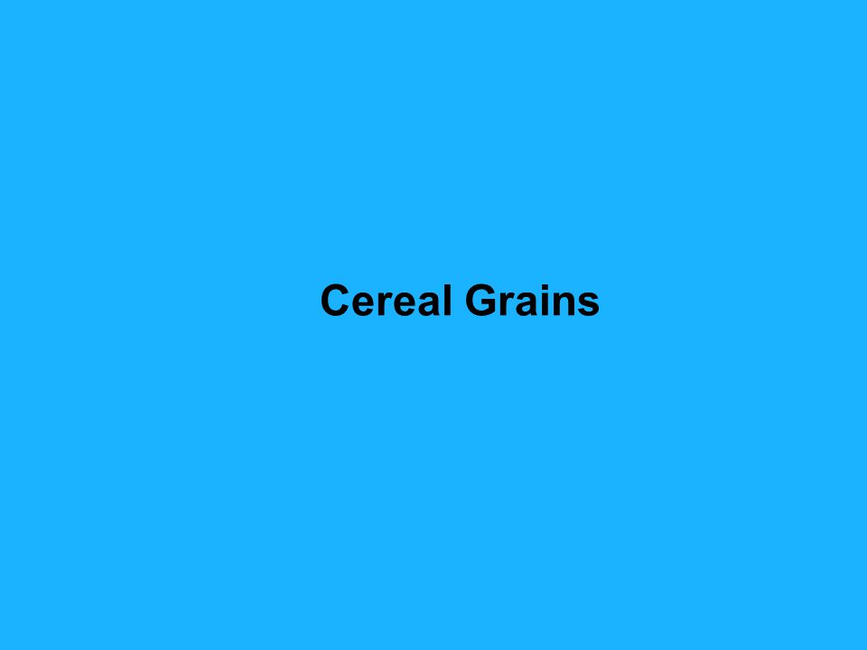 Barley was the major cereal until about 200 B.C.(2000 B.C.