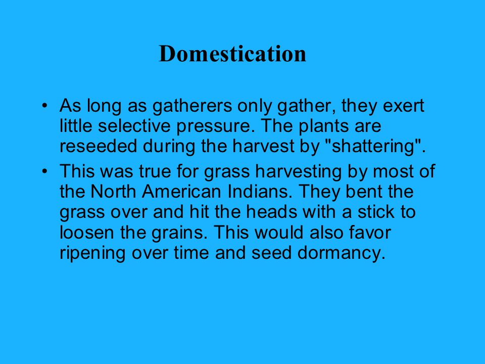 Domestication As long as gatherers only gather, they exert little selective pressure.