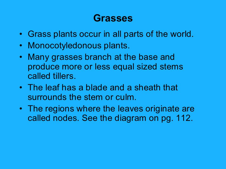 Grasses Grass plants occur in all parts of the world.