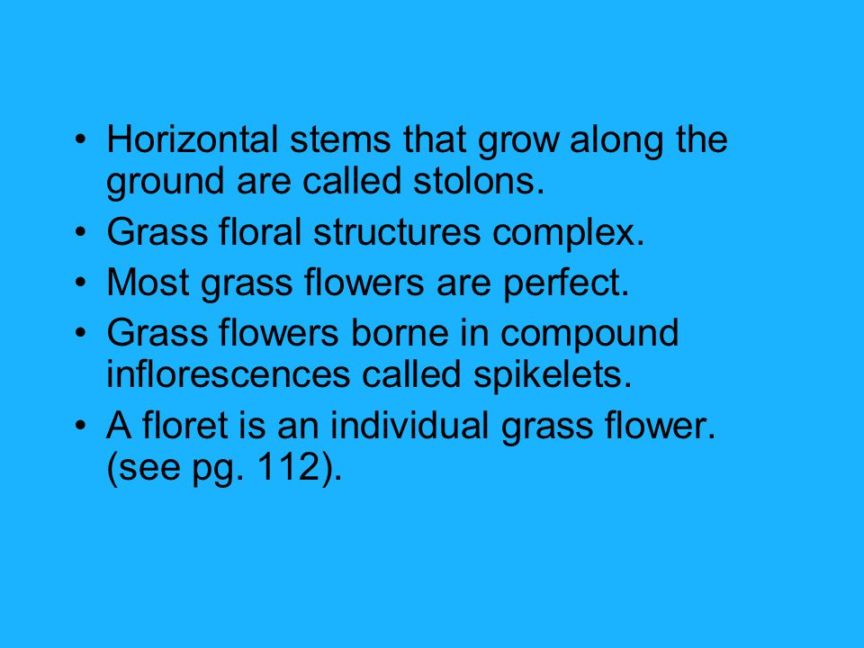 Horizontal stems that grow along the ground are called stolons.