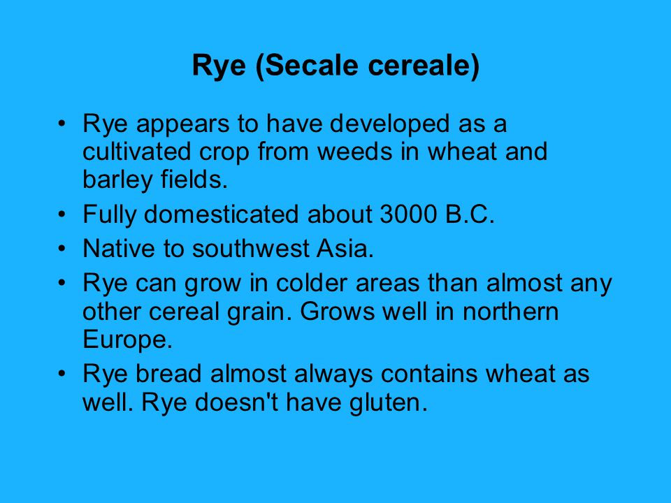 Rye (Secale cereale) Rye appears to have developed as a cultivated crop from weeds in wheat and barley fields.