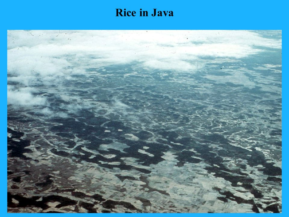 Rice in Java