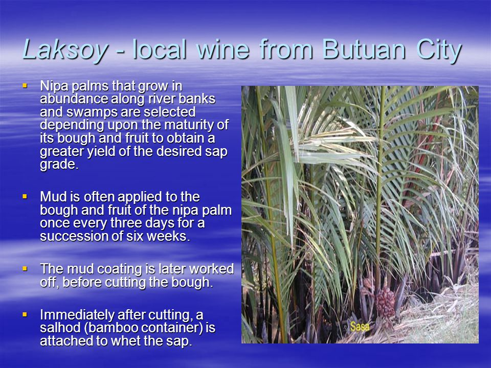 Laksoy - local wine from Butuan City  Nipa palms that grow in abundance along river banks and swamps are selected depending upon the maturity of its bough and fruit to obtain a greater yield of the desired sap grade.