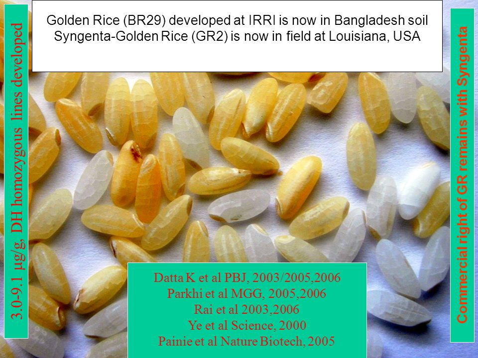 3.0-9.1  g/g, DH homozygous lines developed Datta K et al PBJ, 2003/2005,2006 Parkhi et al MGG, 2005,2006 Rai et al 2003,2006 Ye et al Science, 2000 Painie et al Nature Biotech, 2005 Golden Rice (BR29) developed at IRRI is now in Bangladesh soil Syngenta-Golden Rice (GR2) is now in field at Louisiana, USA Commercial right of GR remains with Syngenta