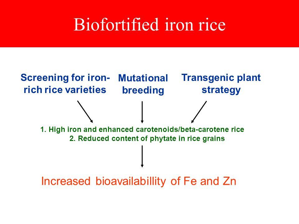 Biofortified iron rice 1. High iron and enhanced carotenoids/beta-carotene rice 2.