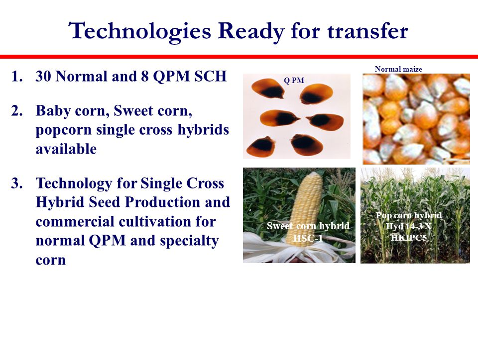 Technologies Ready for transfer 1.30 Normal and 8 QPM SCH 2.Baby corn, Sweet corn, popcorn single cross hybrids available 3.Technology for Single Cross Hybrid Seed Production and commercial cultivation for normal QPM and specialty corn Sweet corn hybrid HSC-1 Pop corn hybrid Hyd 14-3 X HKIPC5 Normal maize SCH Seed production Q PM
