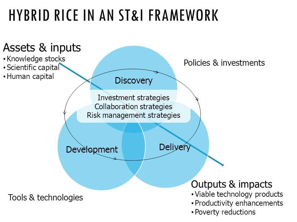 HYBRID RICE IN AN ST&I FRAMEWORK Discovery DeliveryDevelopment Investment strategies Collaboration strategies Risk management strategies Outputs & impacts Viable technology products Productivity enhancements Poverty reductions Policies & investments Tools & technologies Assets & inputs Knowledge stocks Scientific capital Human capital