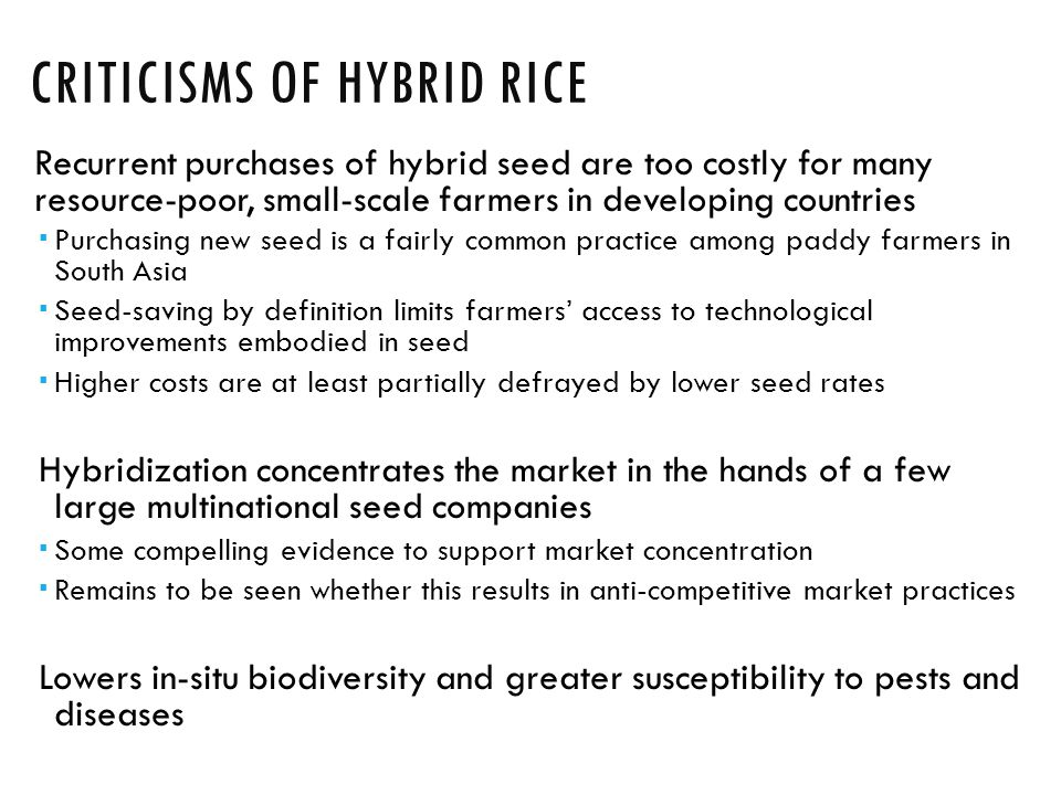 CRITICISMS OF HYBRID RICE Recurrent purchases of hybrid seed are too costly for many resource-poor, small-scale farmers in developing countries  Purchasing new seed is a fairly common practice among paddy farmers in South Asia  Seed-saving by definition limits farmers' access to technological improvements embodied in seed  Higher costs are at least partially defrayed by lower seed rates Hybridization concentrates the market in the hands of a few large multinational seed companies  Some compelling evidence to support market concentration  Remains to be seen whether this results in anti-competitive market practices Lowers in-situ biodiversity and greater susceptibility to pests and diseases