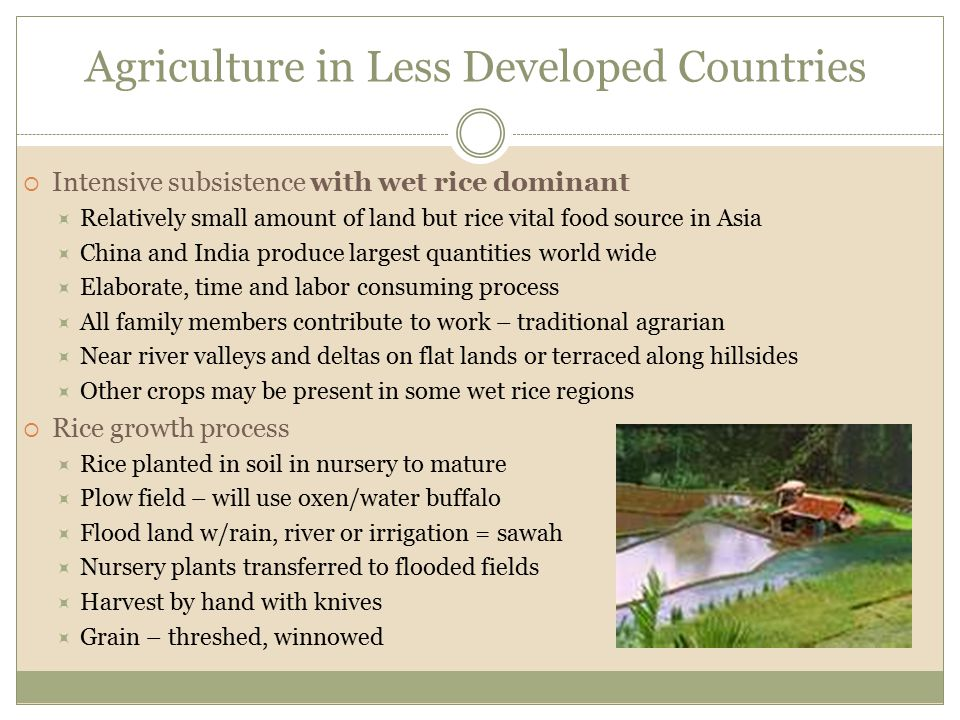 Agriculture in Less Developed Countries  Intensive subsistence with wet rice dominant  Relatively small amount of land but rice vital food source in