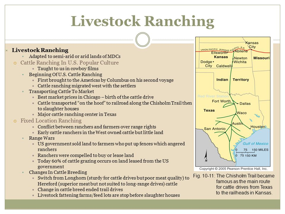  Livestock Ranching Adapted to semi-arid or arid lands of MDCs Cattle Ranching In U.S. Popular Culture Taught to us in cowboy films Beginning Of U.S.