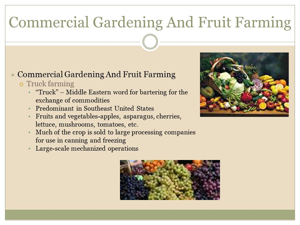 """ Commercial Gardening And Fruit Farming Truck farming """"Truck"""" – Middle Eastern word for bartering for the exchange of commodities Predominant in Sout"""