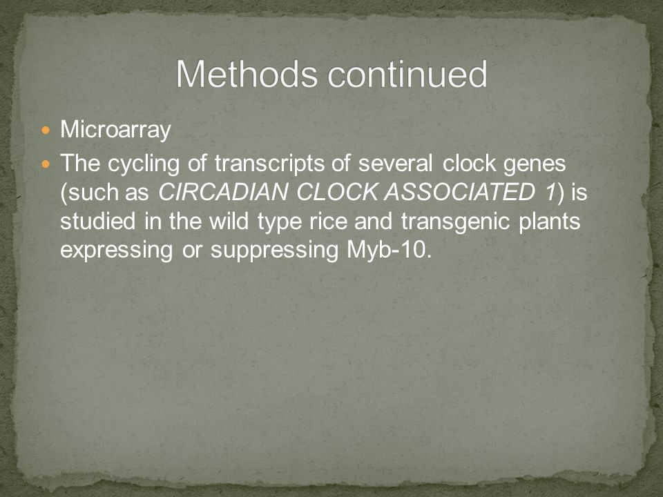 Microarray The cycling of transcripts of several clock genes (such as CIRCADIAN CLOCK ASSOCIATED 1) is studied in the wild type rice and transgenic plants expressing or suppressing Myb-10.