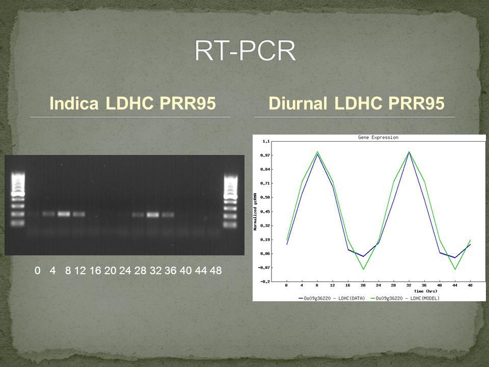 Indica LDHC PRR95Diurnal LDHC PRR95 0 4 8 12 16 20 24 28 32 36 40 44 48