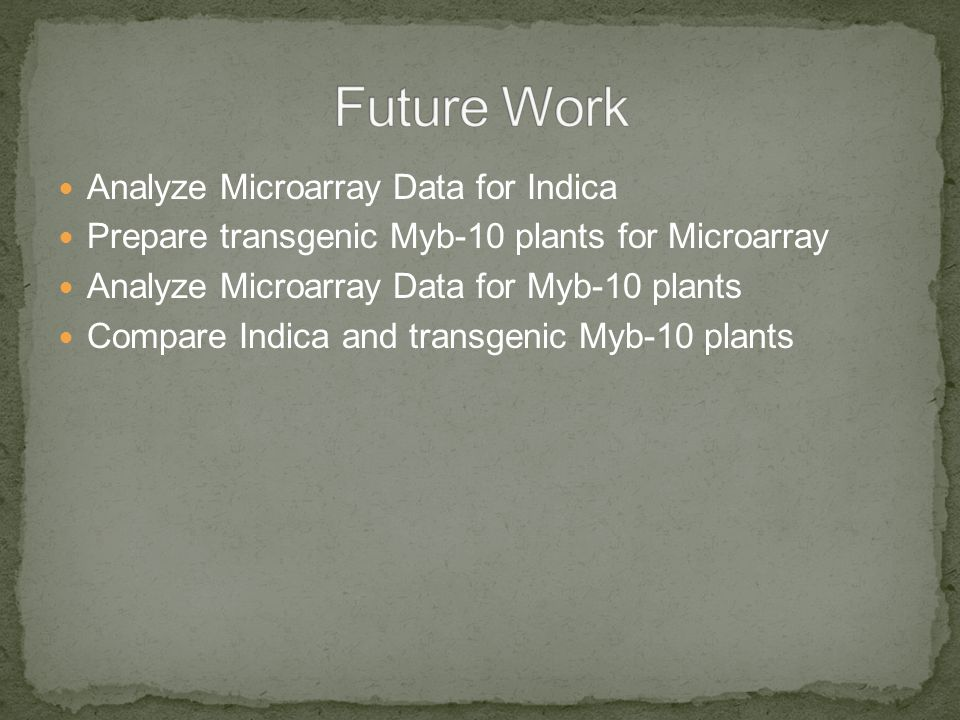 Analyze Microarray Data for Indica Prepare transgenic Myb-10 plants for Microarray Analyze Microarray Data for Myb-10 plants Compare Indica and transgenic Myb-10 plants