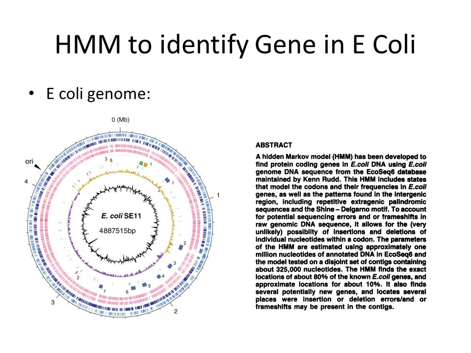 HMM to identify Gene in E Coli E coli genome: