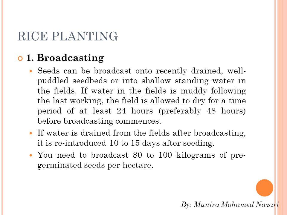 RICE PLANTING 1.