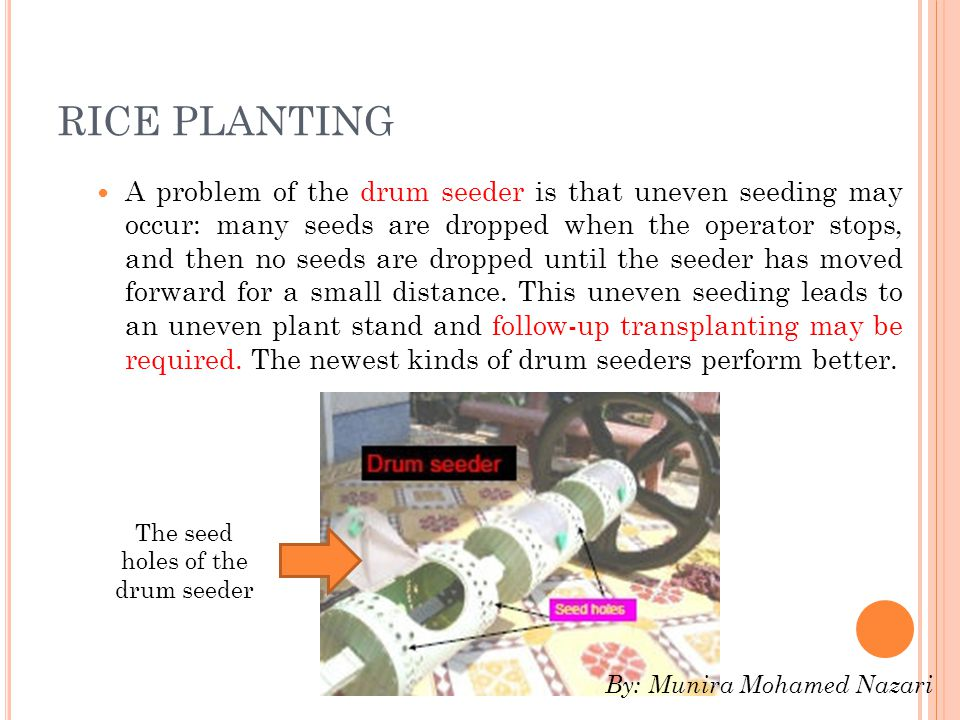 RICE PLANTING A problem of the drum seeder is that uneven seeding may occur: many seeds are dropped when the operator stops, and then no seeds are dropped until the seeder has moved forward for a small distance.