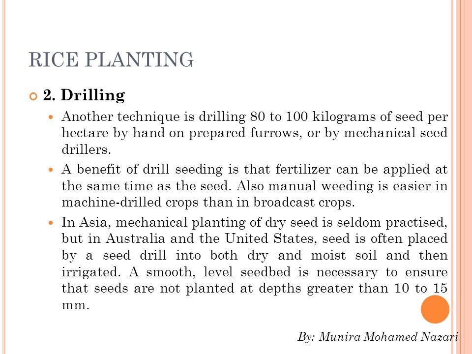 RICE PLANTING 2.