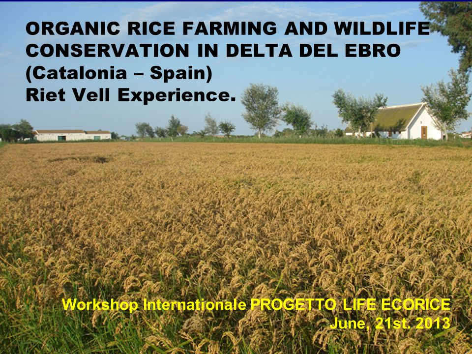 ORGANIC RICE FARMING AND WILDLIFE CONSERVATION IN DELTA DEL EBRO (Catalonia – Spain) Riet Vell Experience. Workshop Internationale PROGETTO LIFE ECORI