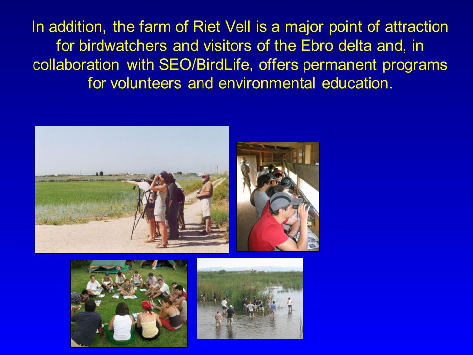 In addition, the farm of Riet Vell is a major point of attraction for birdwatchers and visitors of the Ebro delta and, in collaboration with SEO/BirdL