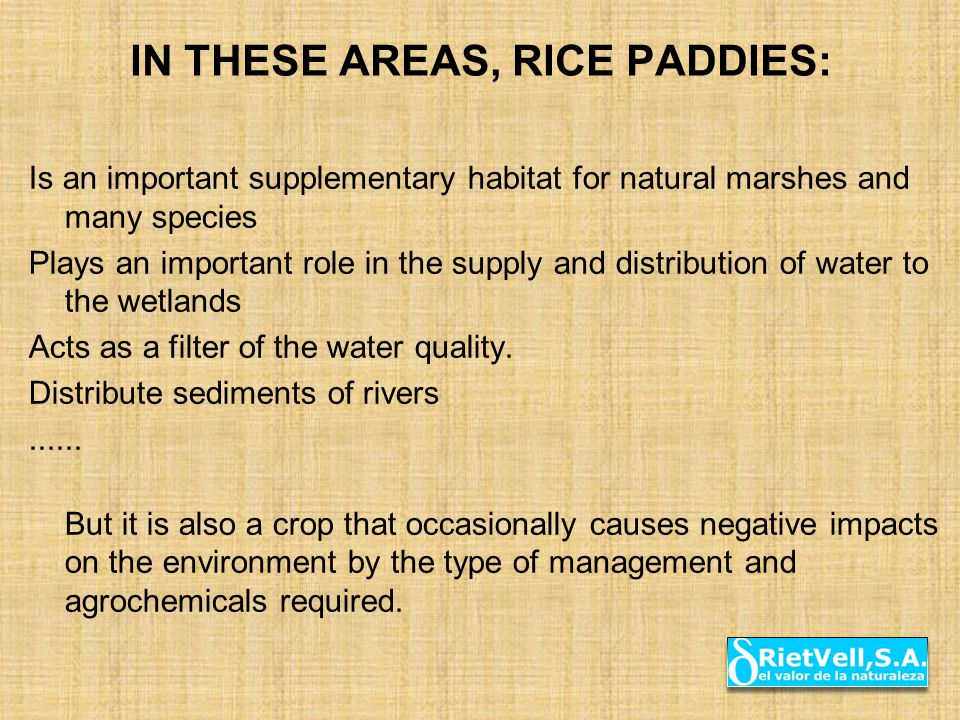 IN THESE AREAS, RICE PADDIES: Is an important supplementary habitat for natural marshes and many species Plays an important role in the supply and dis