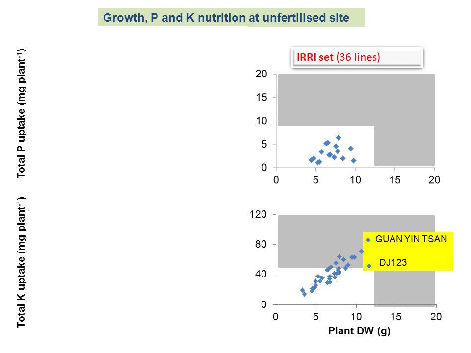 Total P uptake (mg plant -1 ) Plant DW (g) Total K uptake (mg plant -1 ) Local (44 varieties) At303 Bg300 Bg305 Bg357 Bg400-1 GUAN YIN TSAN DJ123 IRRI set (36 lines) At303 Bg300 Bg305 Bg400-1 Bw451 Growth, P and K nutrition at unfertilised site