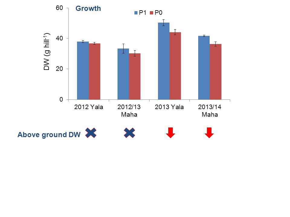 DW (g hill -1 ) Growth Above ground DW Grain yield Total P uptake Tissue [P] Plant height vv