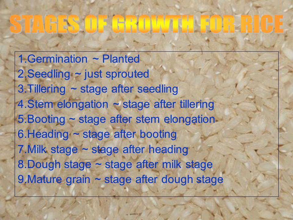 1.Germination ~ Planted 2.Seedling ~ just sprouted 3.Tillering ~ stage after seedling 4.Stem elongation ~ stage after tillering 5.Booting ~ stage after stem elongation 6.Heading ~ stage after booting 7.Milk stage ~ stage after heading 8.Dough stage ~ stage after milk stage 9.Mature grain ~ stage after dough stage