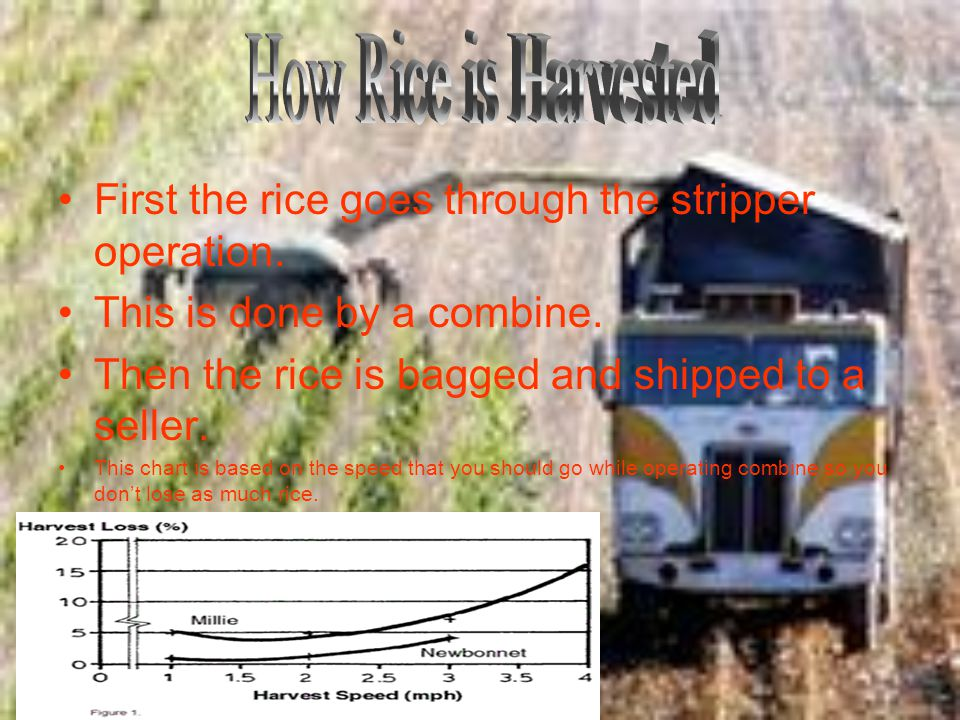 First the rice goes through the stripper operation. This is done by a combine. Then the rice is bagged and shipped to a seller. This chart is based on