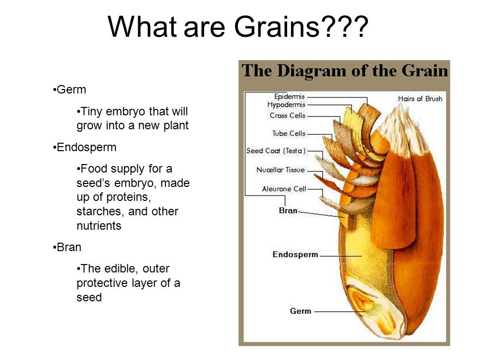 Nutrients in Grains Endosperm: complex carbohydrates, proteins, and small amounts of vitamins and minerals Bran: rich in fiber, B vitamins, and some trace minerals Germ: B vitamins, vitamin E, iron, zinc, and other trace minerals; some protein, and a small amount of saturated fat