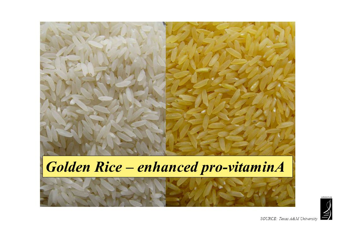 SOURCE: Texas A&M University Golden Rice – enhanced pro-vitaminA