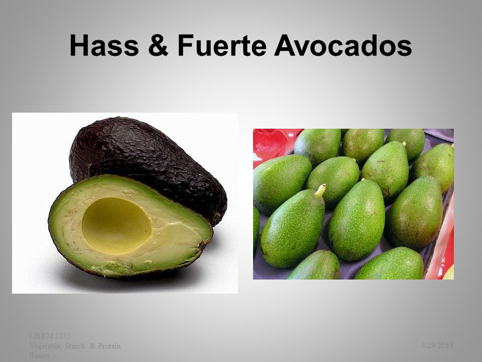 Hass & Fuerte Avocados 4/29/2015 CHRM 1035 Vegetable, Starch & Protein Basics 55