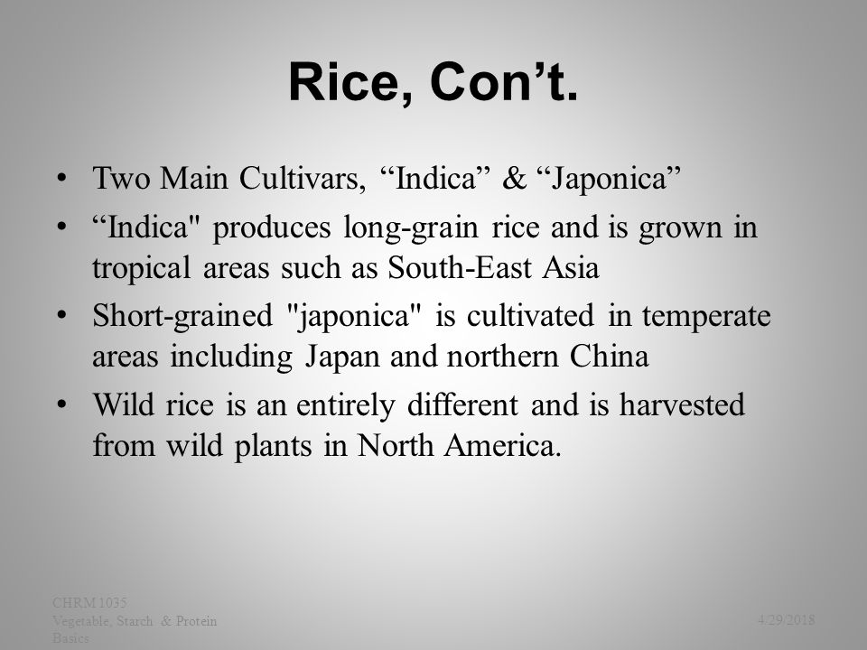 Jasmine Rice Thai Fragrant Rice long-grain& Nutty Aroma Grains will cling when cooked, though it is less sticky than other rices (less amylopectin) 4/29/2015 CHRM 1035 Vegetable, Starch & Protein Basics 19