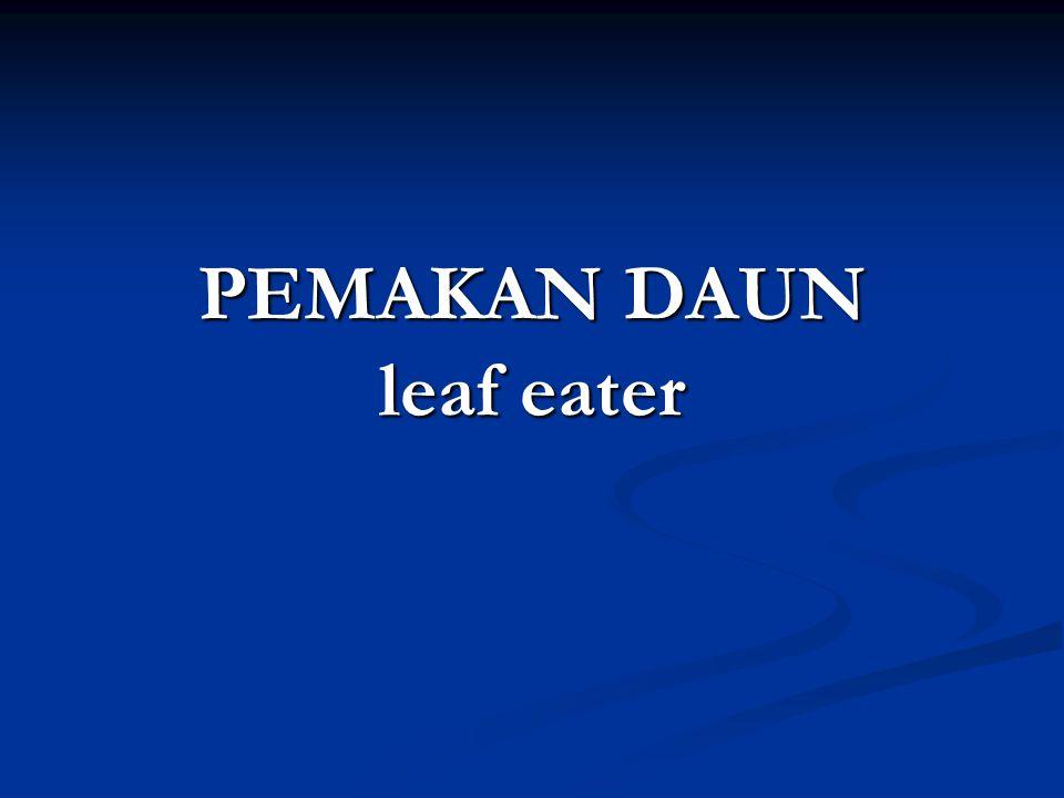 PEMAKAN DAUN leaf eater
