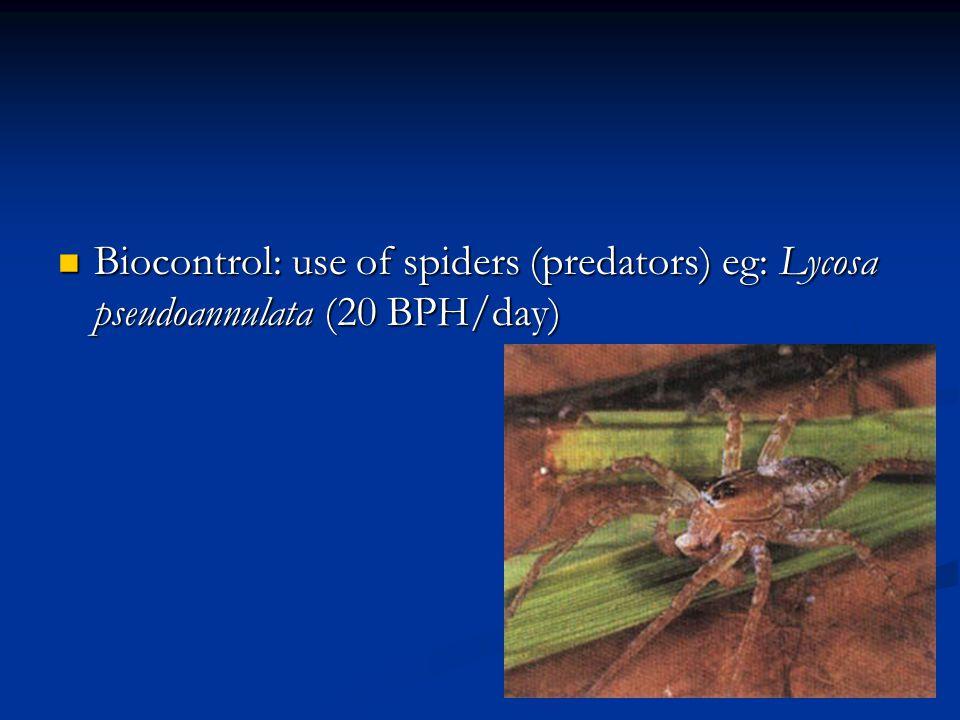 Biocontrol: use of spiders (predators) eg: Lycosa pseudoannulata (20 BPH/day) Biocontrol: use of spiders (predators) eg: Lycosa pseudoannulata (20 BPH