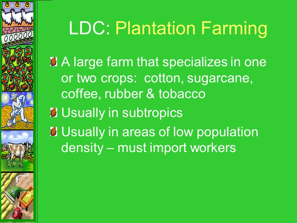 LDC: Plantation Farming A large farm that specializes in one or two crops: cotton, sugarcane, coffee, rubber & tobacco Usually in subtropics Usually in areas of low population density – must import workers