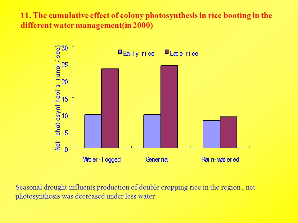 11. The cumulative effect of colony photosynthesis in rice booting in the different water management(in 2000) Seasonal drought influents production of