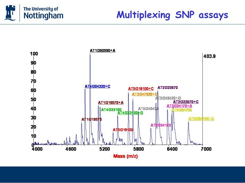 Multiplexing SNP assays