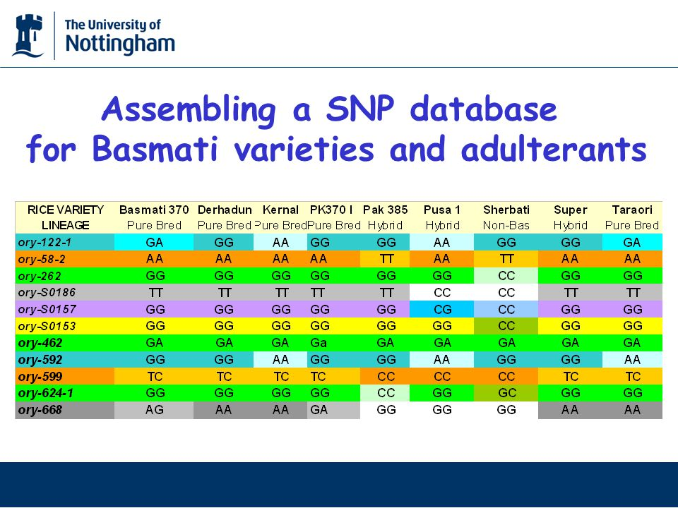 Assembling a SNP database for Basmati varieties and adulterants