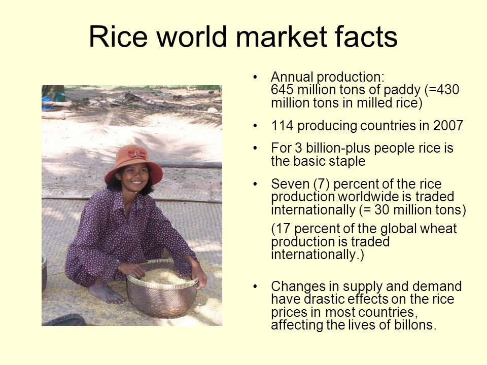 Rice world market facts Annual production: 645 million tons of paddy (=430 million tons in milled rice) 114 producing countries in 2007 For 3 billion-plus people rice is the basic staple Seven (7) percent of the rice production worldwide is traded internationally (= 30 million tons) (17 percent of the global wheat production is traded internationally.) Changes in supply and demand have drastic effects on the rice prices in most countries, affecting the lives of billons.